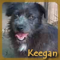 Affiche des chiens à l'adoption  A PARTAGER * IMPRIMER * DIFFUSER Keegan10