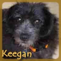 Affiche des chiens à l'adoption  A PARTAGER * IMPRIMER * DIFFUSER Keegan11