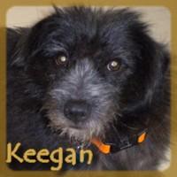 Affiche des chiens à l'adoption  A PARTAGER * IMPRIMER * DIFFUSER Keegan12