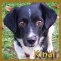 Affiche des chiens à l'adoption  A PARTAGER * IMPRIMER * DIFFUSER Kinazc10