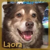 Affiche des chiens à l'adoption  A PARTAGER * IMPRIMER * DIFFUSER Laora10