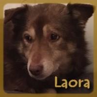 Affiche des chiens à l'adoption  A PARTAGER * IMPRIMER * DIFFUSER Laora_10