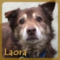 Affiche des chiens à l'adoption  A PARTAGER * IMPRIMER * DIFFUSER Laora_11