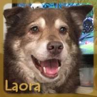 Affiche des chiens à l'adoption  A PARTAGER * IMPRIMER * DIFFUSER Laora_12