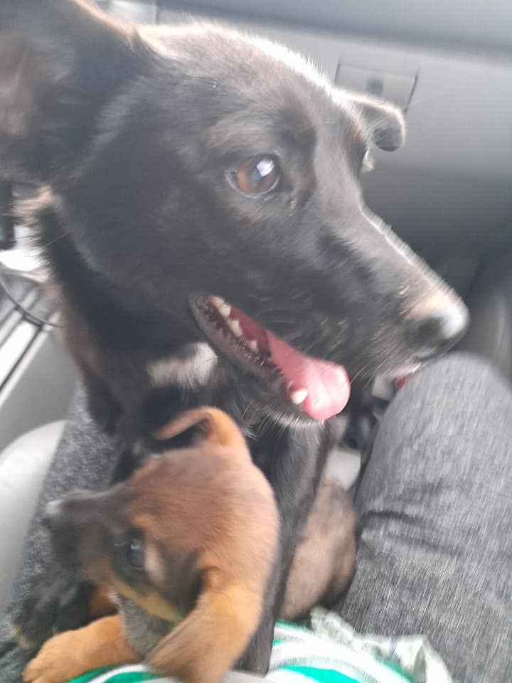 PAPRIKA née le 01/01/2020, maman et son bébé trouvés au bord de la route- EN FA DANS LE 95- R-SC-30MA- Maman_12