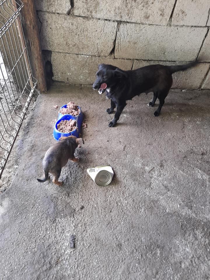 PAPRIKA née le 01/01/2020, maman et son bébé trouvés au bord de la route- EN FA DANS LE 95- R-SC-30MA- Maman_13