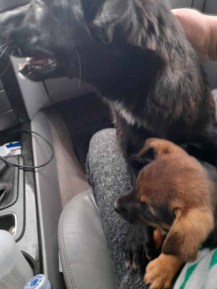 PAPRIKA née le 01/01/2020, maman et son bébé trouvés au bord de la route- EN FA DANS LE 95- R-SC-30MA- Maman_14