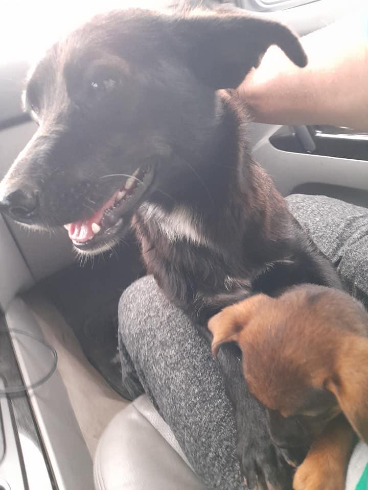 PAPRIKA née le 01/01/2020, maman et son bébé trouvés au bord de la route- EN FA DANS LE 95- R-SC-30MA- Maman_16