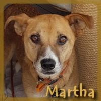 Affiche des chiens à l'adoption  A PARTAGER * IMPRIMER * DIFFUSER Martha10