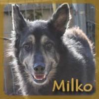 Affiche des chiens à l'adoption  A PARTAGER * IMPRIMER * DIFFUSER Miko_v10