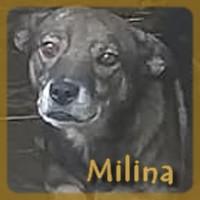 Affiche des chiens à l'adoption  A PARTAGER * IMPRIMER * DIFFUSER Milina10
