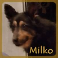 Affiche des chiens à l'adoption  A PARTAGER * IMPRIMER * DIFFUSER Milko_10