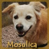 Affiche des chiens à l'adoption  A PARTAGER * IMPRIMER * DIFFUSER Mosuli10
