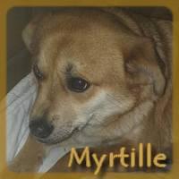 Affiche des chiens à l'adoption  A PARTAGER * IMPRIMER * DIFFUSER Myrtil10