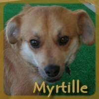 Affiche des chiens à l'adoption  A PARTAGER * IMPRIMER * DIFFUSER Myrtil11