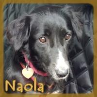 Affiche des chiens à l'adoption  A PARTAGER * IMPRIMER * DIFFUSER Naola_11