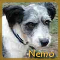 Affiche des chiens à l'adoption  A PARTAGER * IMPRIMER * DIFFUSER Nemo10