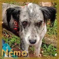 Affiche des chiens à l'adoption  A PARTAGER * IMPRIMER * DIFFUSER Nemo_210