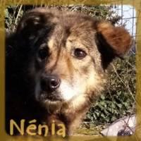 Affiche des chiens à l'adoption  A PARTAGER * IMPRIMER * DIFFUSER Nenia510