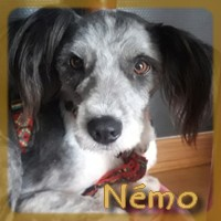 Affiche des chiens à l'adoption  A PARTAGER * IMPRIMER * DIFFUSER Nzomo11