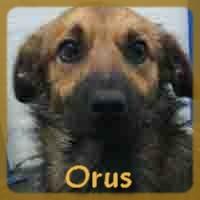 Affiche des chiens à l'adoption  A PARTAGER * IMPRIMER * DIFFUSER Orus10