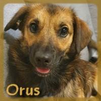Affiche des chiens à l'adoption  A PARTAGER * IMPRIMER * DIFFUSER Orus11