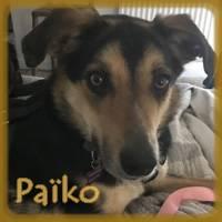 Affiche des chiens à l'adoption  A PARTAGER * IMPRIMER * DIFFUSER Pazcko10