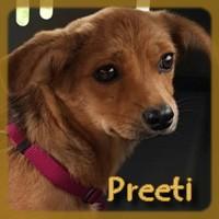 Affiche des chiens à l'adoption  A PARTAGER * IMPRIMER * DIFFUSER Preeti10