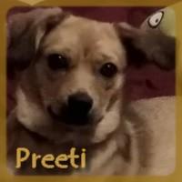Affiche des chiens à l'adoption  A PARTAGER * IMPRIMER * DIFFUSER Preeti11