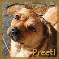 Affiche des chiens à l'adoption  A PARTAGER * IMPRIMER * DIFFUSER Preeti12