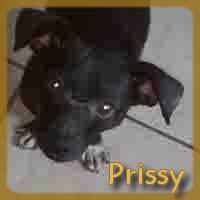 Affiche des chiens à l'adoption  A PARTAGER * IMPRIMER * DIFFUSER Prissy10