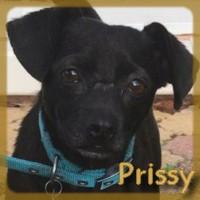 Affiche des chiens à l'adoption  A PARTAGER * IMPRIMER * DIFFUSER Prissy12