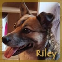 Affiche des chiens à l'adoption  A PARTAGER * IMPRIMER * DIFFUSER Riley_11