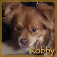 Affiche des chiens à l'adoption  A PARTAGER * IMPRIMER * DIFFUSER Robby_10