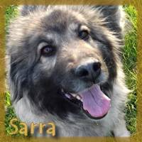 Affiche des chiens à l'adoption  A PARTAGER * IMPRIMER * DIFFUSER Sarra10