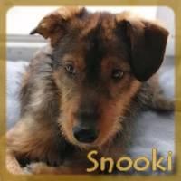 Affiche des chiens à l'adoption  A PARTAGER * IMPRIMER * DIFFUSER Snooki10