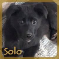 Affiche des chiens à l'adoption  A PARTAGER * IMPRIMER * DIFFUSER Solo10