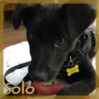 Affiche des chiens à l'adoption  A PARTAGER * IMPRIMER * DIFFUSER Solo11