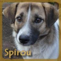 Affiche des chiens à l'adoption  A PARTAGER * IMPRIMER * DIFFUSER Spirou10