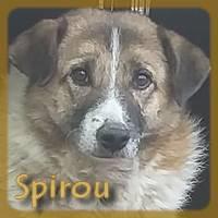 Affiche des chiens à l'adoption  A PARTAGER * IMPRIMER * DIFFUSER Spirou11