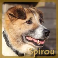 Affiche des chiens à l'adoption  A PARTAGER * IMPRIMER * DIFFUSER Spirou13