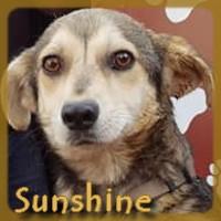 Affiche des chiens à l'adoption  A PARTAGER * IMPRIMER * DIFFUSER Sunshi11