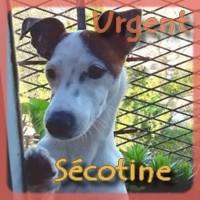 Affiche des chiens à l'adoption  A PARTAGER * IMPRIMER * DIFFUSER Szocot10