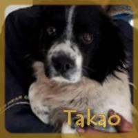 Affiche des chiens à l'adoption  A PARTAGER * IMPRIMER * DIFFUSER Takao110
