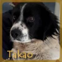 Affiche des chiens à l'adoption  A PARTAGER * IMPRIMER * DIFFUSER Takao_10