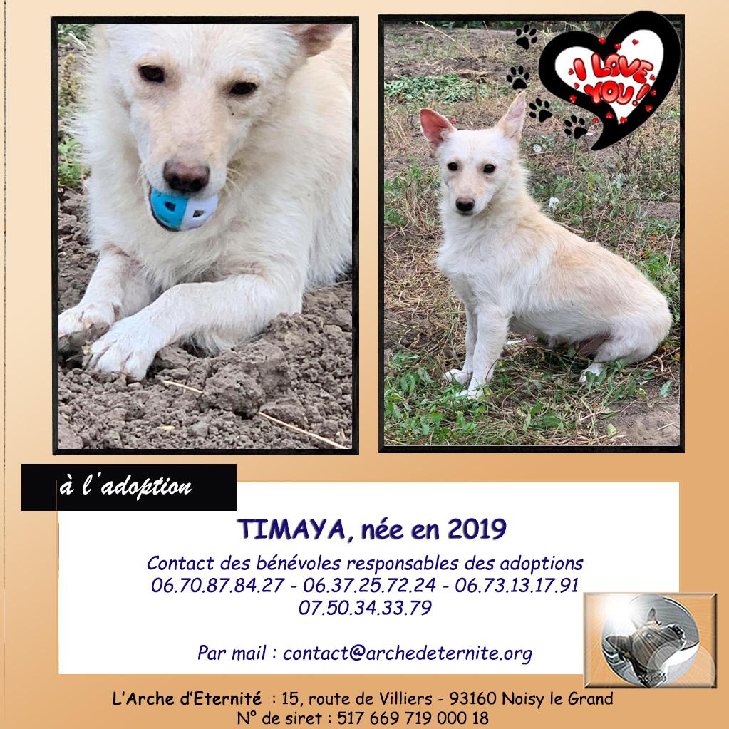 Timaya, née en 2019, Maman et ses 3 chiots attrapés au bord de la route - Parrainée par Jeena - EN GARDE EXTERIEURE-R-SC Timaya11