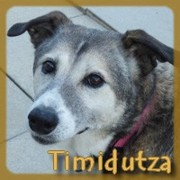 Affiche des chiens à l'adoption  A PARTAGER * IMPRIMER * DIFFUSER Timidu12