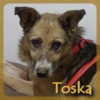 Affiche des chiens à l'adoption  A PARTAGER * IMPRIMER * DIFFUSER Toska_10