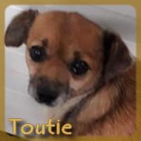 Affiche des chiens à l'adoption  A PARTAGER * IMPRIMER * DIFFUSER Toutie10
