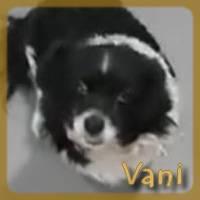 Affiche des chiens à l'adoption  A PARTAGER * IMPRIMER * DIFFUSER Vani10